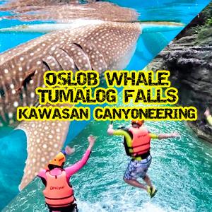 oslob whale tours